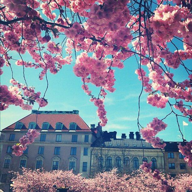 Kungsträdgården i blom helalf.se