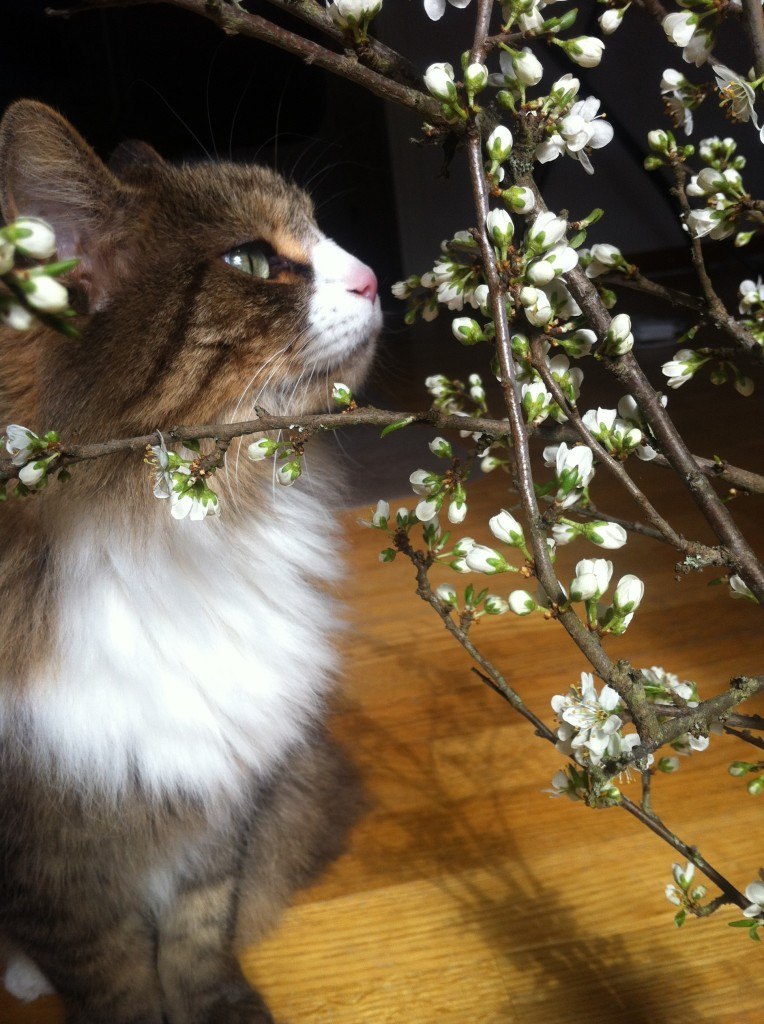 Katten Bamse