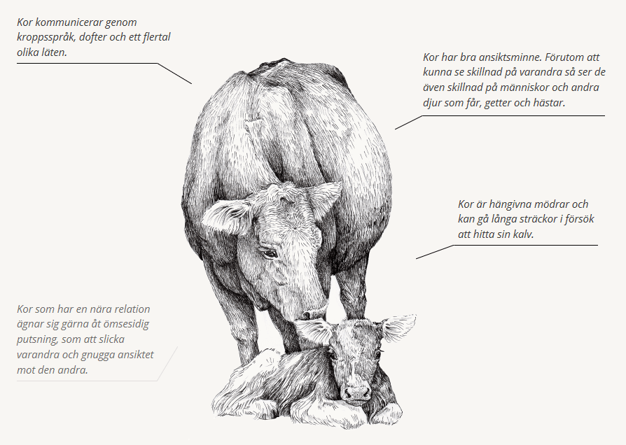 Djurfabriken.se