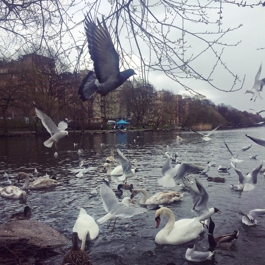 Fåglar helalf.se