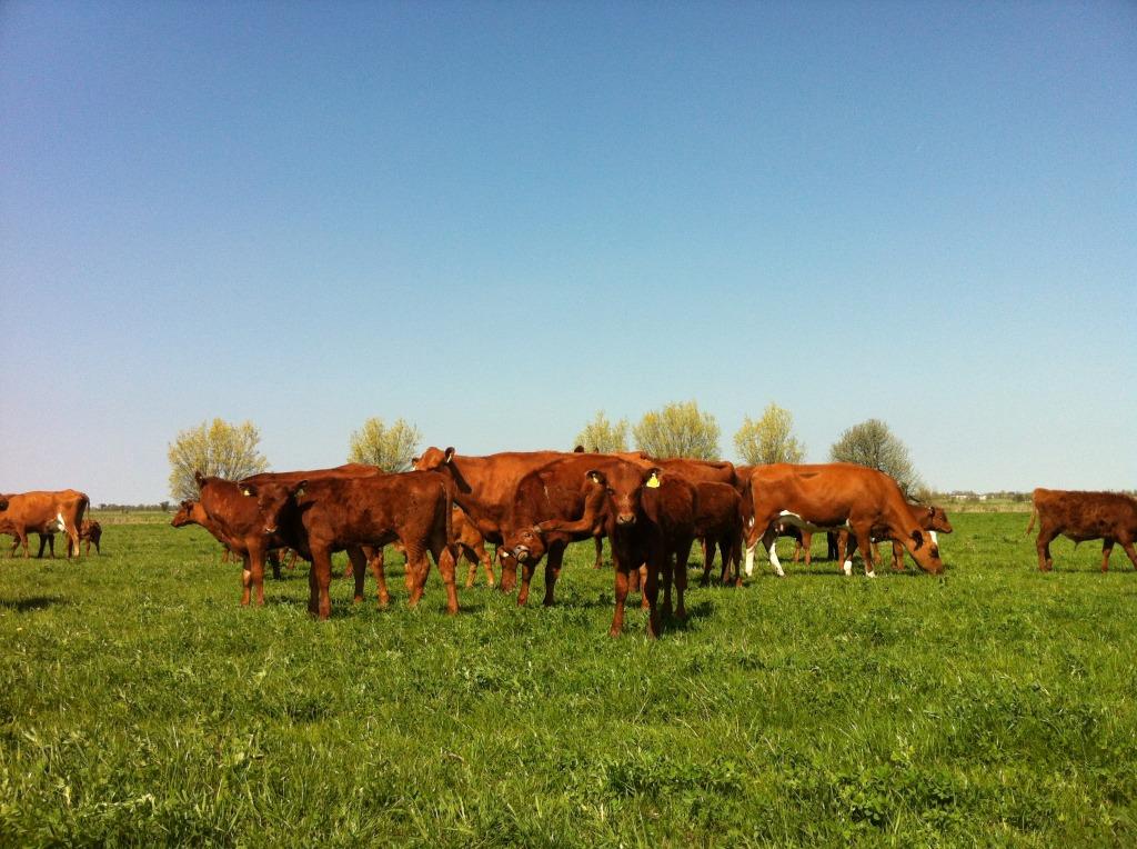 Kor på Ängavallen helalf.se