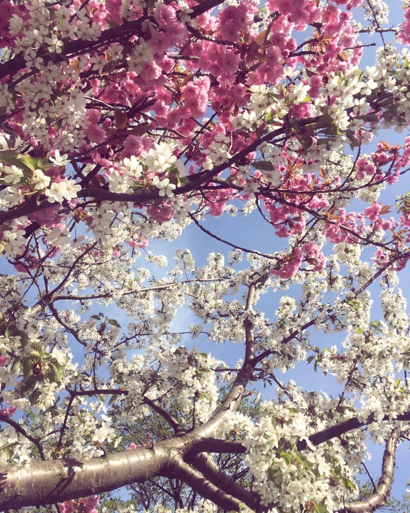 Blommande träd helalf.se