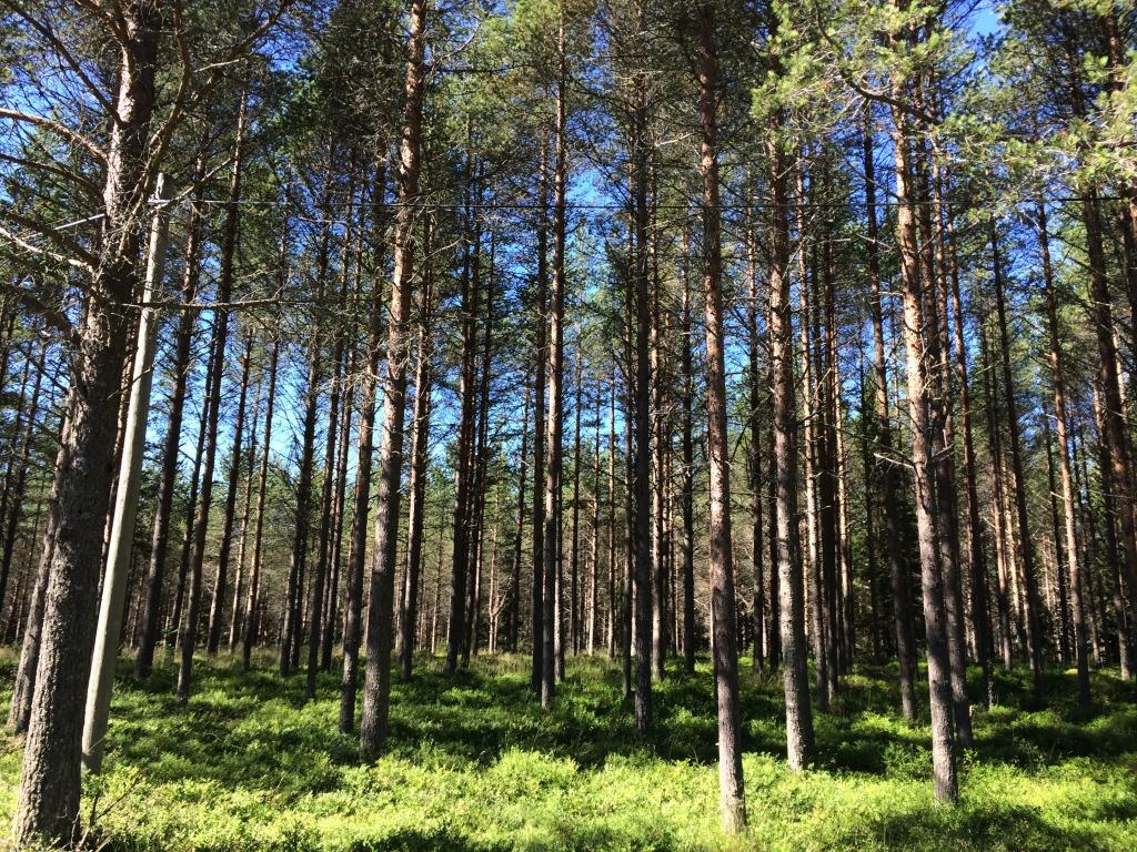 Skog helalf.se