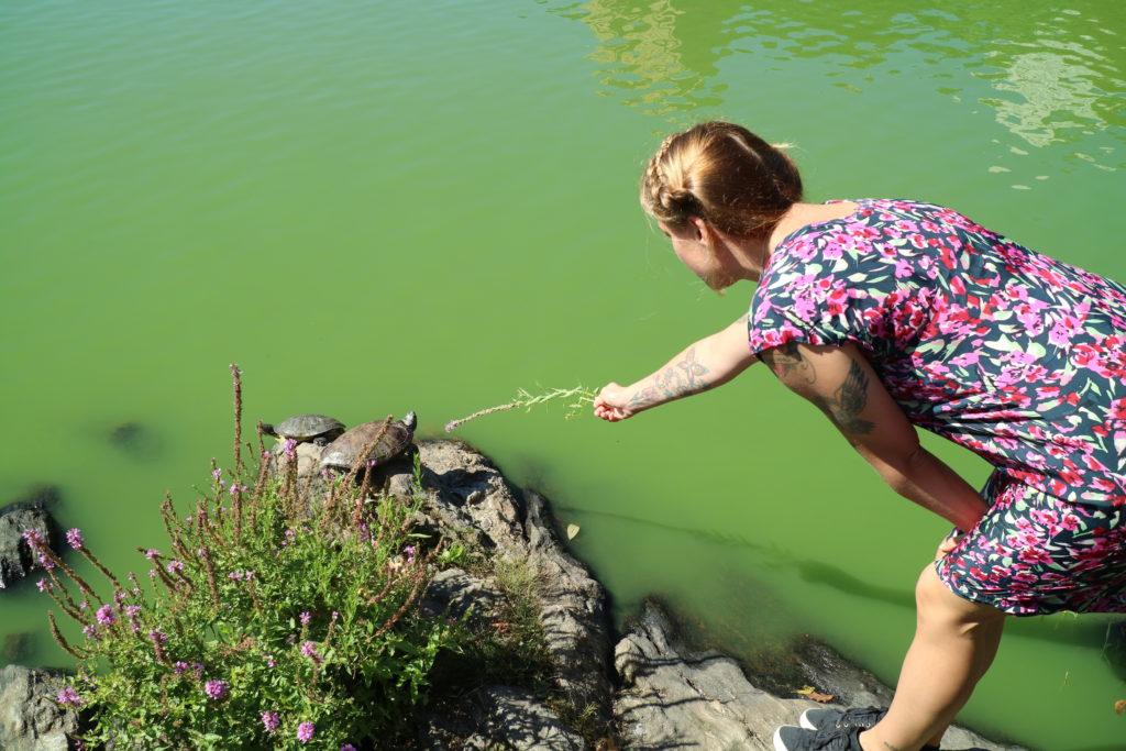 Central Park sköldpaddor helalf.se