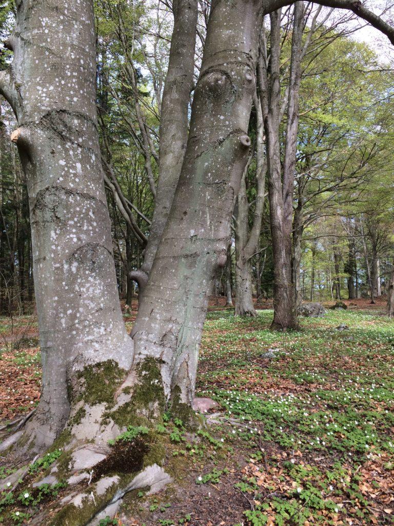 Bokträd helalf.se